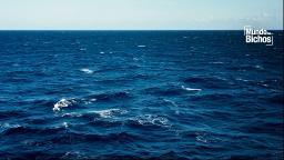 Água: a grandeza continental