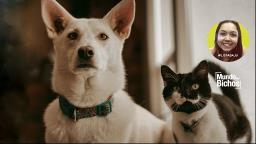 O afeto demonstrado por cães e gatos é realmente diferente?