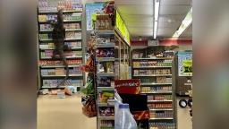 Lagarto gigante escala prateleiras de loja na Tailândia