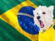 Veja dicas para preparar o seu pet para a Copa do Mundo