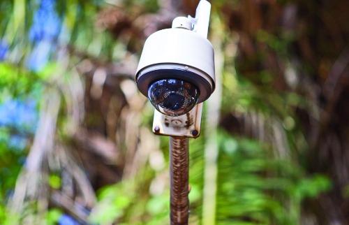 Olho de Águia - Foto: Weber Sian / A Cidade