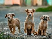 Shopping D. Pedro recebe feira de adoção de cães