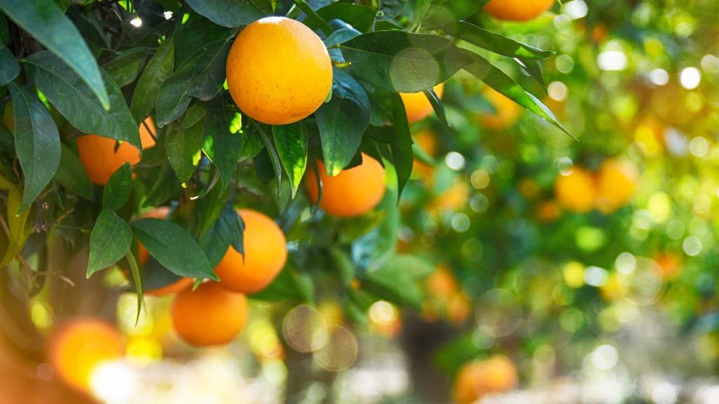 Página do Encitros no ACidade ON trará informações sobre a citricultura (Foto: Divulgação) - Foto: Divulgação