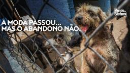 Após onda de adoções, abandono de animais domésticos dispara 70% na pandemia