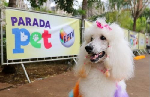 Parada Pet Campinas - Foto: Luciana Corrêa