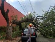 Caminhão derruba árvore no Nossa Senhora Auxiliadora
