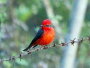 Estudos do DAAE apontam Araraquara como passagem para aves migratórias