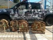 Polícia resgata 10 pássaros e multa homem em R$ 5 mil