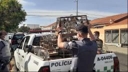 Polícia Ambiental apreende 56 aves em cativeiro na Vila Xavier