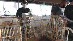 Polícia ambiental apreende pássaros no Parque Jambeiro