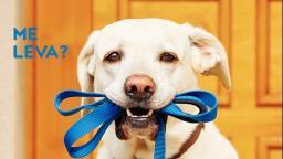 Quer fazer seu cão mais feliz?