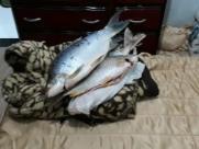 Polícia Ambiental acha 15 kg de peixes escondidos em guarda-roupa