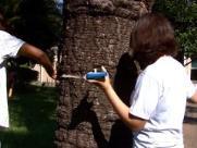 Pesquisa mapeia 5 mil árvores na UFSCar para acompanhar crescimento e evitar acidentes