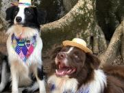 Pets terão festa julina na Lagoa do Taquaral neste domingo