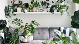 Plantas dentro de casa, um carinho em tempos de isolamento.