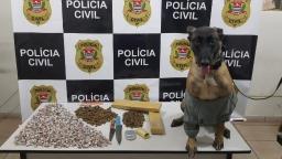 Polícia Civil prende grupo com mais de mil porções de maconha