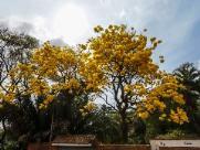 Araraquara terá sol com poucas nuvens e temperatura alta