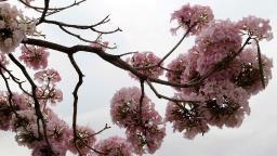 Primavera começa com chuva e tempo frio em Campinas