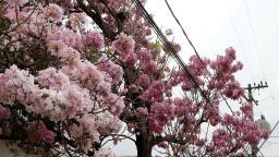 Primavera será com chuva abaixo da média em Campinas