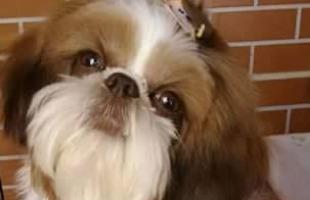 Arquivo pessoal - Família procura o cãozinho Bob, que desapareceu em Riebirão no último dia 20