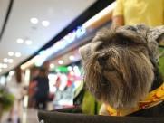 Projeto de lei quer regulamentar entrada de animais em estabelecimentos comerciais