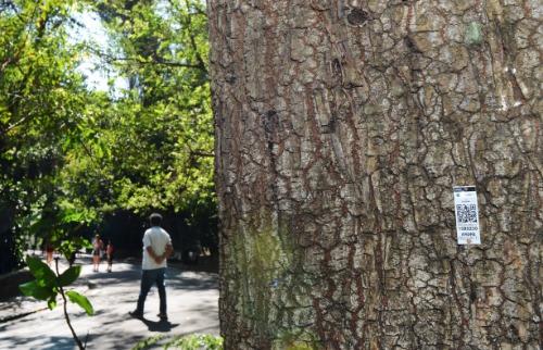 Qualquer um poderá ter acesso a informações das árvores por meio do celular ou tablet - Foto: Divulgação
