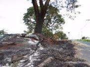 Grupo de amigos criam projeto de plantio de árvores