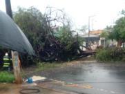 Ribeirão Preto registra quedas de árvores em sábado chuvoso