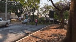 Árvore de grande porte cai e bloqueia pista da Treze de Maio