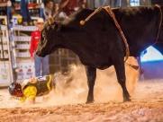Dourado Rodeio Show começa dia 17 de maio; confira
