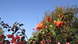 Sábado será de sol e temperatura amena na região de Campinas