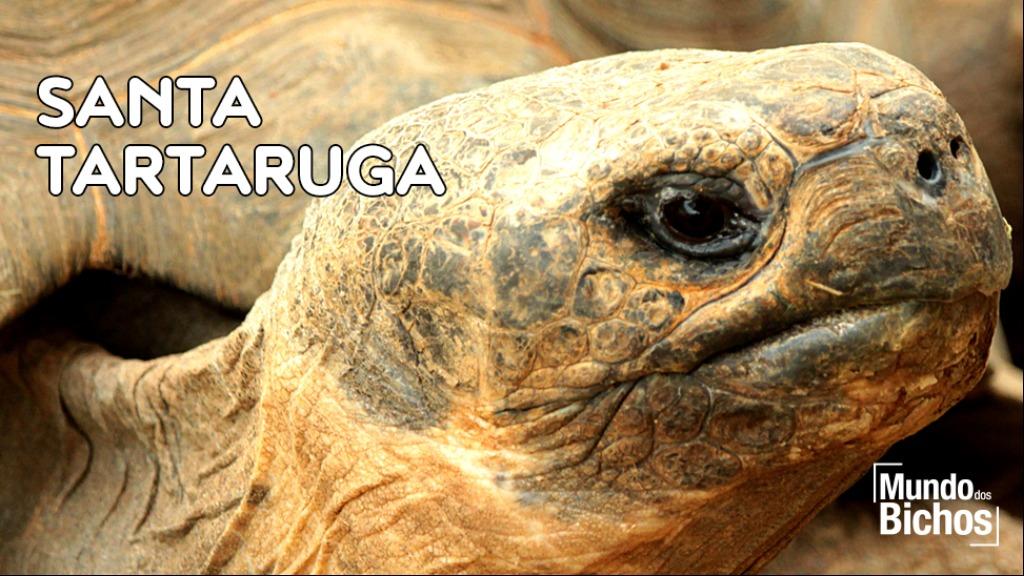 santa tartaruga - Foto: DIVULGAÇÃO/SHUTTERSTOCK