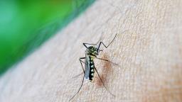 Araraquara registra 24 casos suspeitos de dengue em 2020