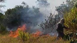 Com tempo seco, casos de fogo em mato se intensificam em São Carlos