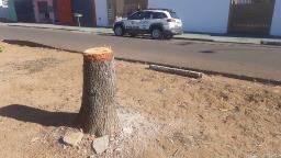 Moradora é multada em R$ 1 mil por cortar árvores no Santa Felícia