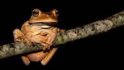 Exposição na UFSCar reúne fotos de espécies nativas do Cerrado