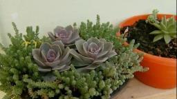 Cultivo de plantas vira hobby e fonte de renda em São Carlos