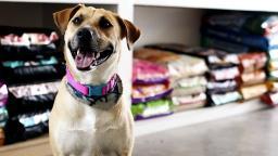 Pet shops apontam aumento de vendas e higienização animal