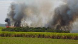 Incêndio destrói  300 mil m² em área de preservação