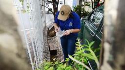 Dengue: Campinas emite novo alerta para dez bairros