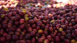 Sabor do café faz de Serra Negra ainda mais especial