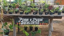 Pegue e pague: é assim que se compra suculentas em Serra Negra
