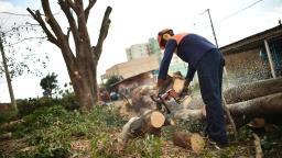Árvores com risco de queda serão trocadas em Socorro