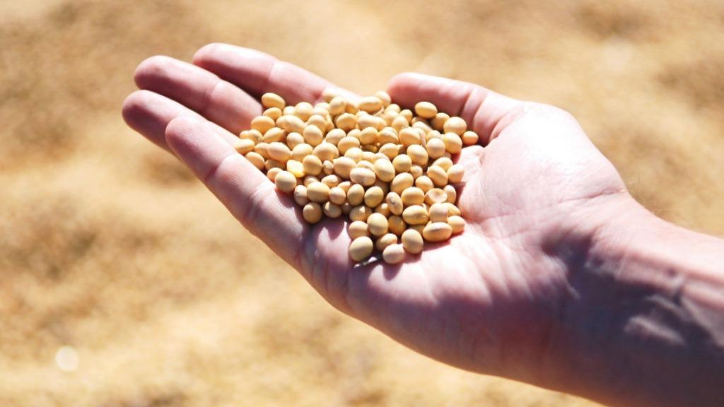 Pecuária e a produção de algodão, soja e suco da laranja são as apostas positivas do especialista (Foto: divulgação/Pixabay)  - Foto: Divulgação/Pixabay