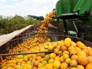 Exportações de Araraquara tem alta de 29,9% em junho