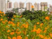 Sábado (9) em Araraquara pode ter Sol e pancadas de chuva
