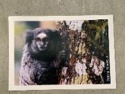 Biblioteca da UFSCar realiza exposição fotográfica da Natureza