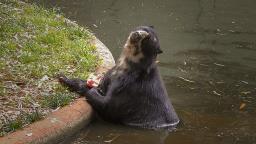 Animais do zoo de Ribeirão recebem sorvete para amenizar o calor
