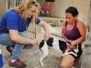 Animais podem ter febre amarela? Confira a opinião de especialistas!