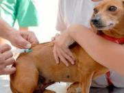 Centro de Zoonoses de Ibaté tem vacina antirrábica disponível